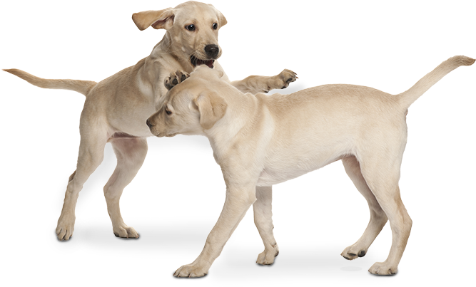 honden banner